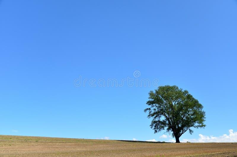 Landscape of Biei, Hokkaido. (Poplar tree). In Japan, it is called the tree of philosophy stock photos
