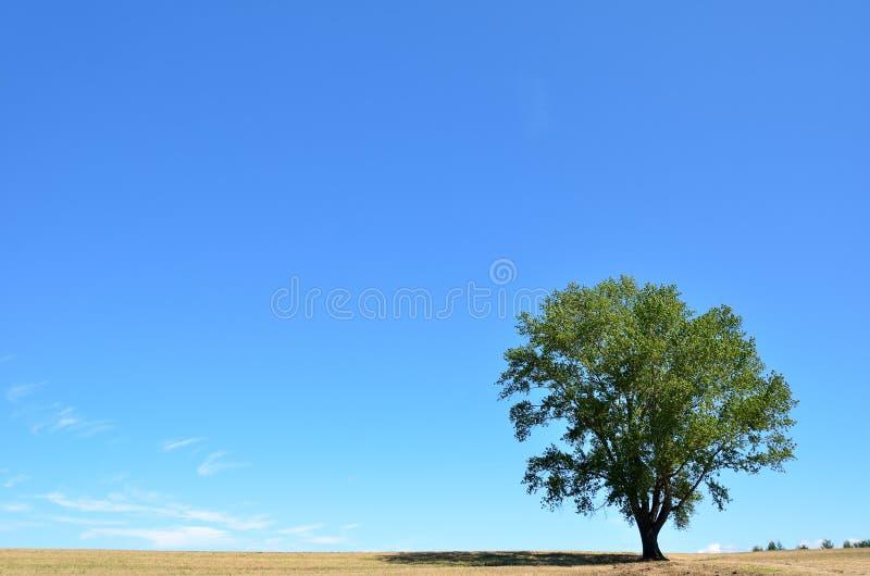 Landscape of Biei, Hokkaido. (Poplar tree). In Japan, it is called the tree of philosophy royalty free stock photography