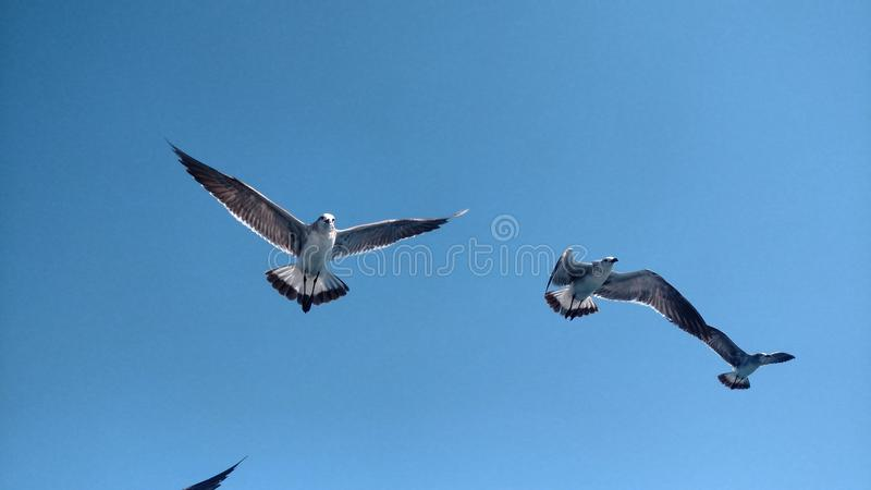 Landscape of birds royalty free stock images