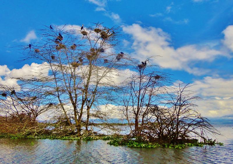 Landscape of birds on tree. Clouds, sky, blue, water, reflection, scene, nature, scenery, environment, lake stock images
