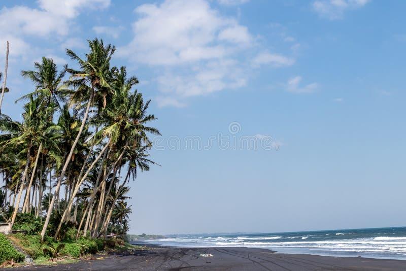 Landscape of black sand beach with beautiful palms. Bali island. Indonesia royalty free stock image