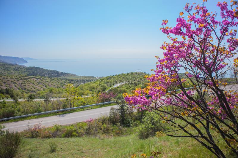 landscape with a blossoming tree, road by the sea stock images
