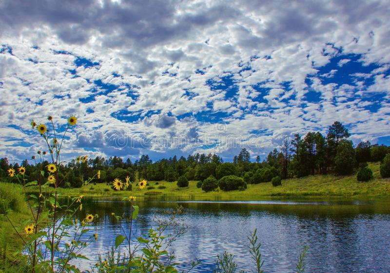 Landscape With Blue Sky, Green Vegetation, Lake, Clouds Reflection, Trees and Yellow Flowers in Arizona, USA stock photos