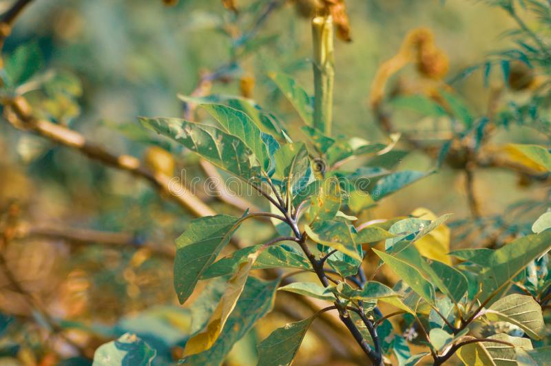 Landscape blurred background of honeysuckle plants and leaves stock images