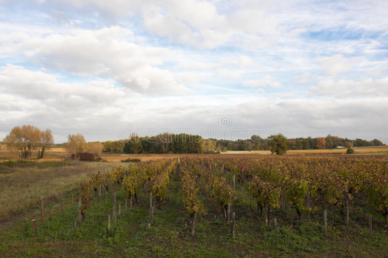 Landscape in Bordeaux in autumn. Landscape in Bordeaux with vineyard and fields in autumn stock image