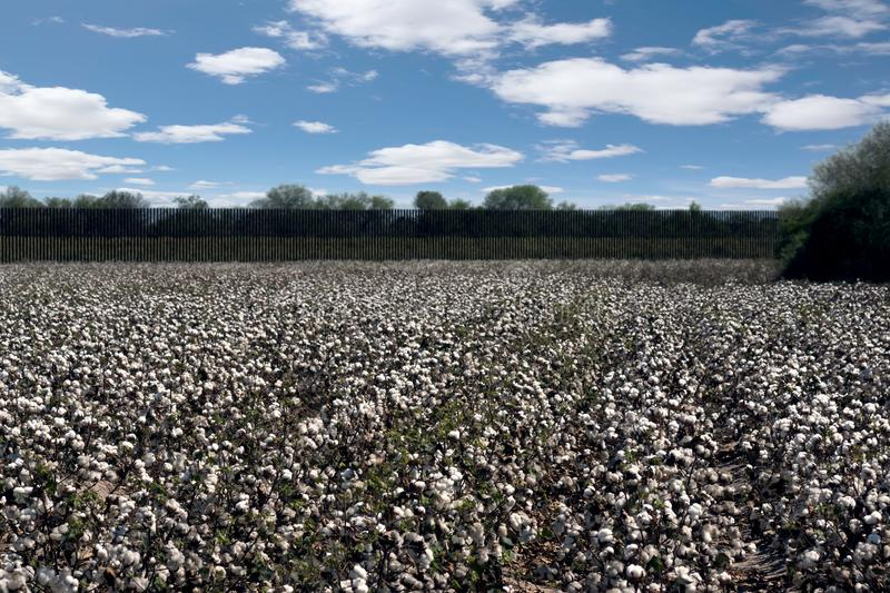 Landscape with a border fence between Mexico and the USA and a cotton field in the foreground royalty free stock photo