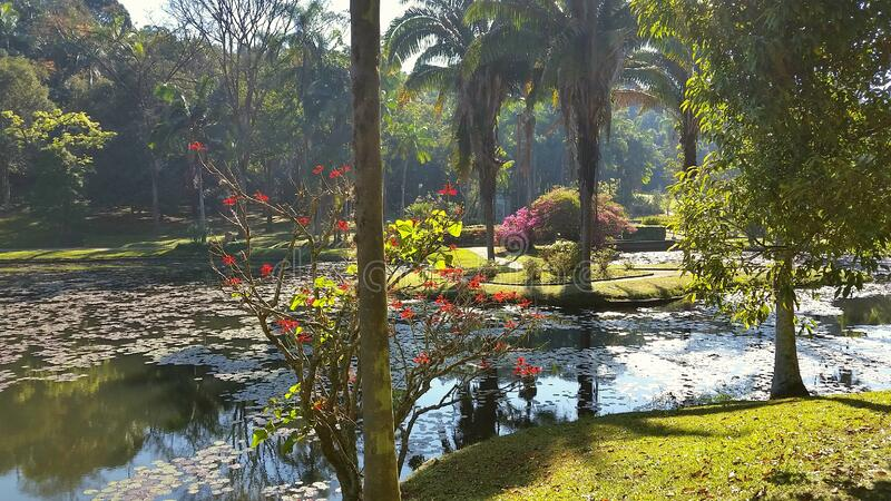 Landscape of the Botanical Garden of Sao Paulo, Brazil. The Botanical Garden of Sao Paulo is managed by USP, the local university. It is a refuge for the royalty free stock photography