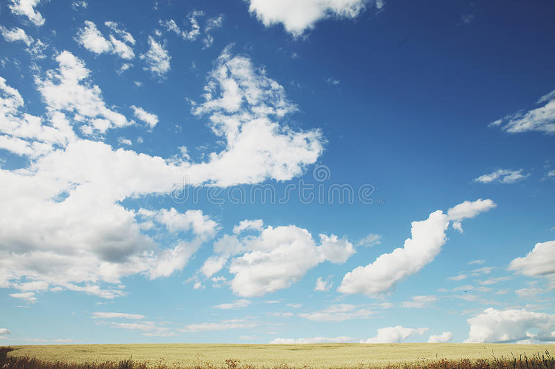 Landscape on a boundless field and the sky. Summer landscape on a boundless field and sky with clouds stock photos