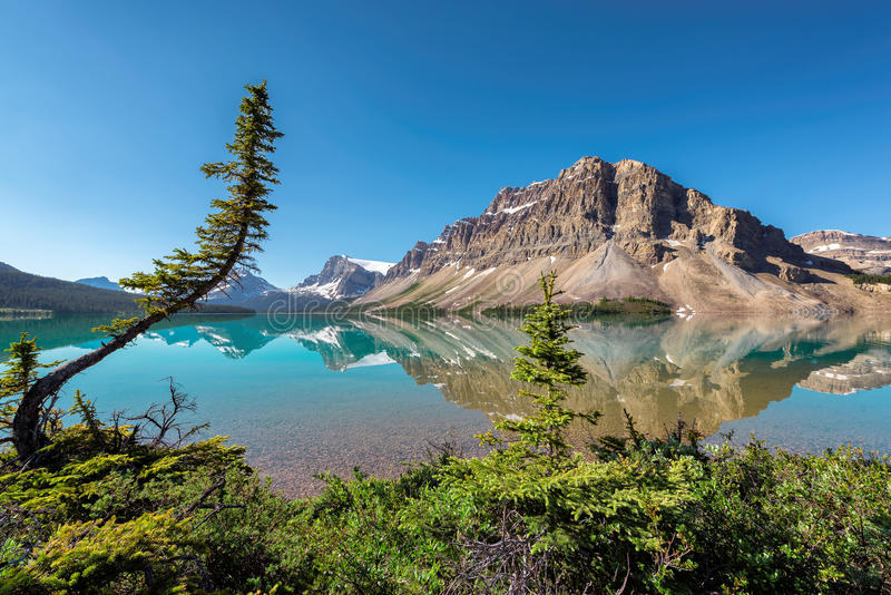 Landscape at Bow lake in Banff National Park royalty free stock image