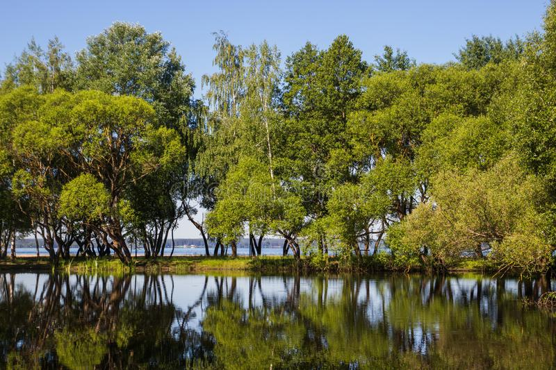Landscape, bright day. Trees, water, bright sky stock images