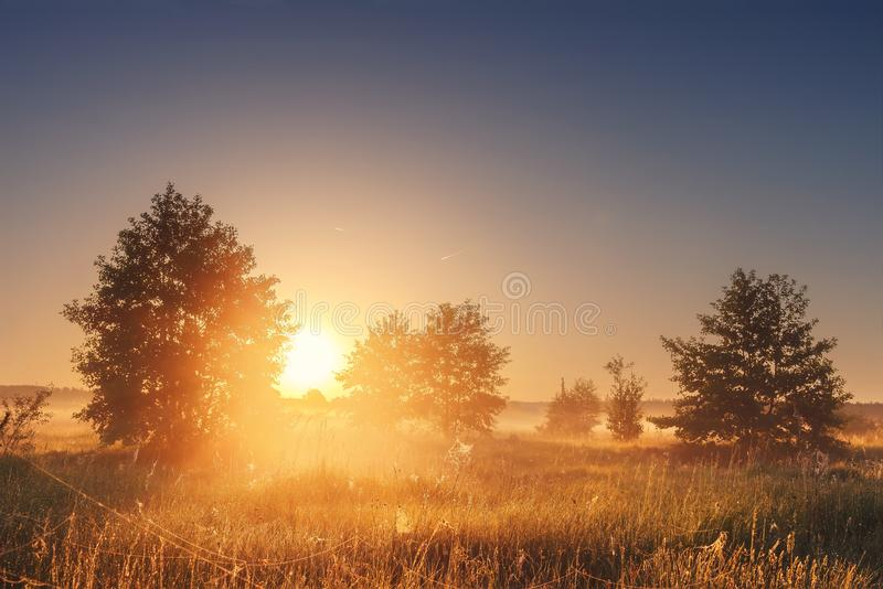 Landscape of bright sunrise over summer misty meadow with trees on clear morning. Natural rural scene of golden field royalty free stock photo