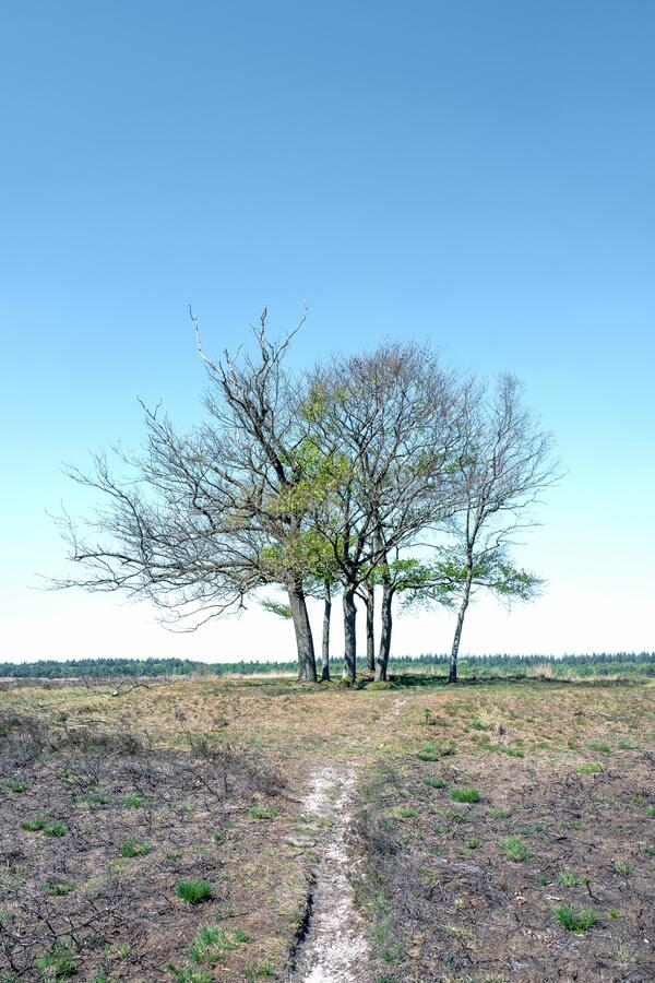 Landscape with burned trees in Elspeet in the Netherlands royalty free stock photo
