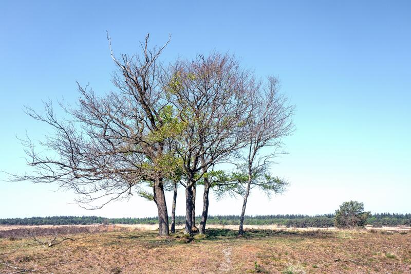 Landscape with burned trees in Elspeet, Netherlands royalty free stock images
