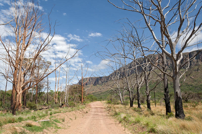 Landscape with burnt trees in the south of Marakele National Park. South Africa royalty free stock photography