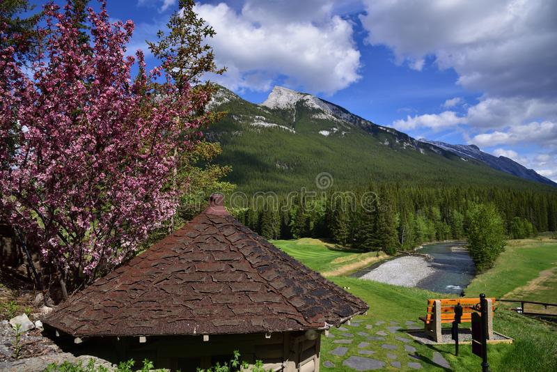A golfing location in middle of amazing landscapes. A landscape of Canadian Rocky Mountain with a view of golf ground in Banff National Park. An ideal location stock photos