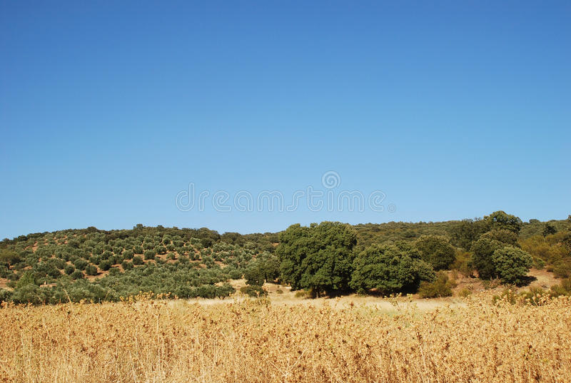 Landscape in Canary Island royalty free stock images