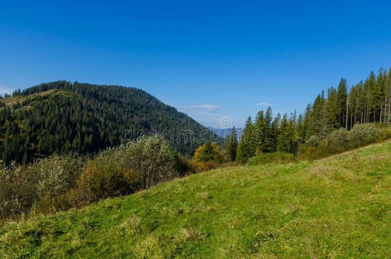 Landscape with carpathian mountains in the spring season. Carpathian mountains in sunny day in the autumn season ukraine landscape forest beautiful green nature stock image