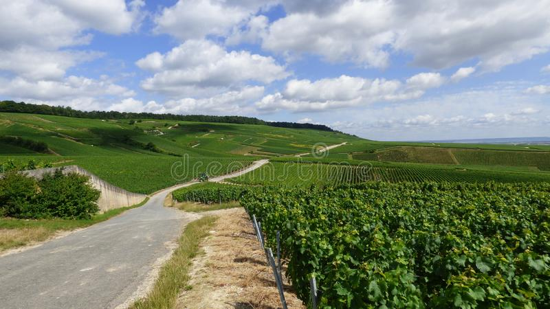 Landscape in the champagne region royalty free stock images