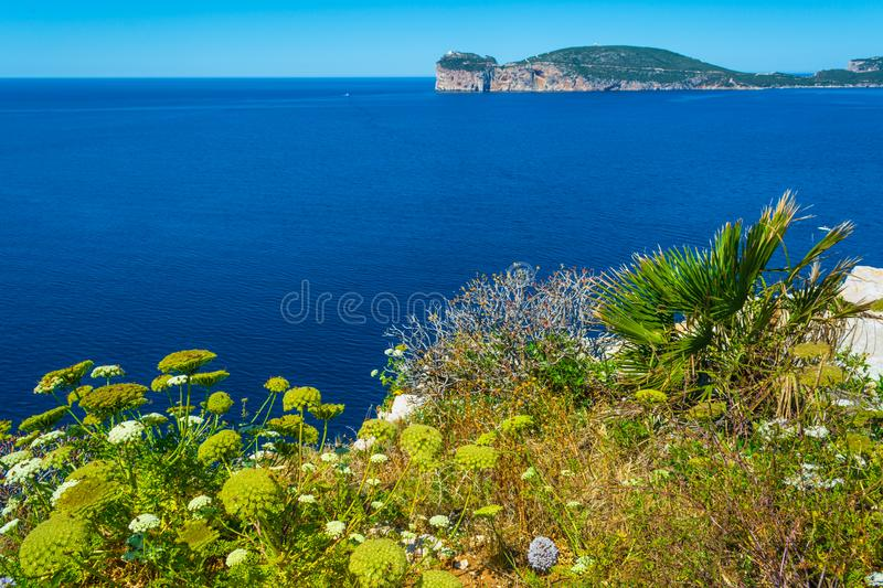 Landscape of the coast of Capo Caccia, in Sardinia. Viewed from Punta Giglio, sea, rock, travel, water, blue, coastline, alghero, tourism, shore, nature, sky royalty free stock images