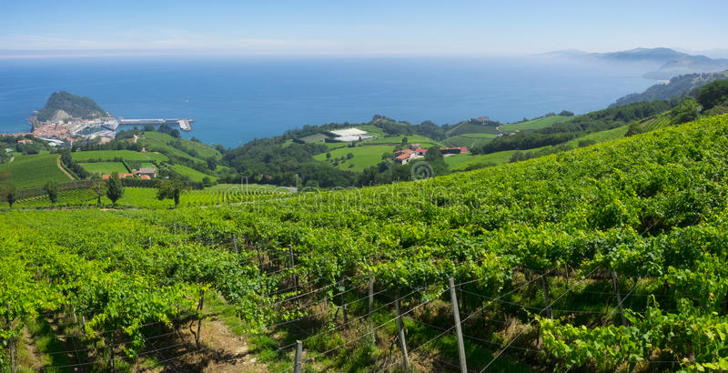 Landscape and coastline in Getaria surrounded by vineyards royalty free stock photo