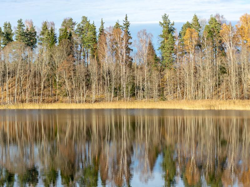Landscape with colorful trees on the water`s edge and wonderful reflections on the water, beautiful autumn day stock photo
