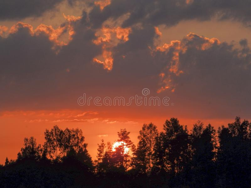 Landscape with contrasting sunrise, fuzzy, black tree silhouettes, hazy clouds, red sky. And white sun royalty free stock images