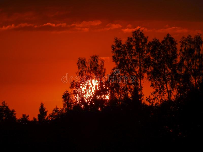 Landscape with contrasting sunrise, fuzzy, black tree silhouettes, hazy clouds, red sky. And white sun stock photo