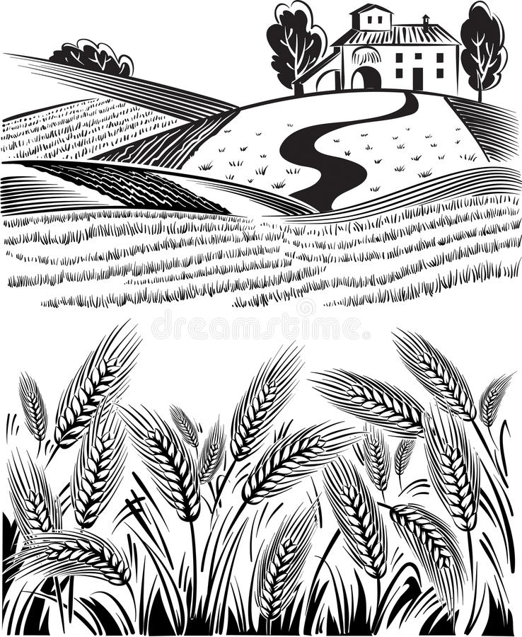 Landscape country, of ripe wheat ears. Swaying in the summer breeze royalty free illustration