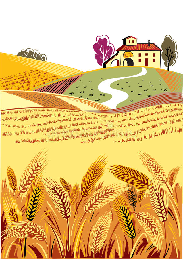 Landscape country, of ripe wheat ears swaying. In the summer breeze stock illustration