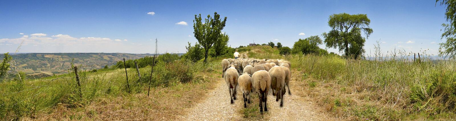 Landscape country road with sheep and shepherd stock images