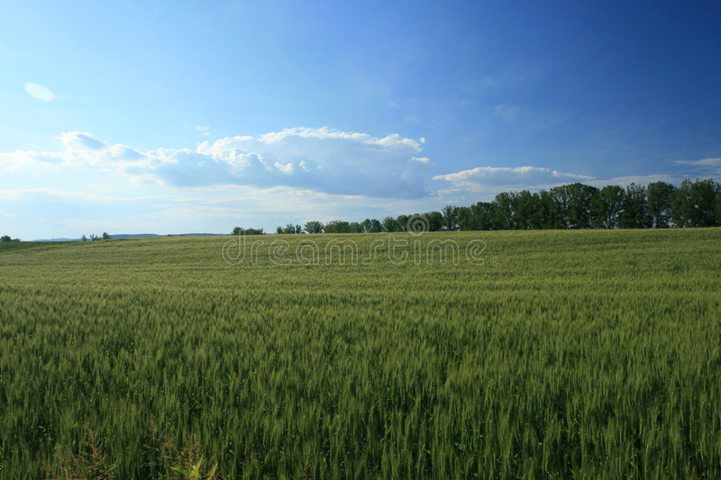 Download Landscape Of A Countryside Royalty Free Stock Images - Image: 2191069