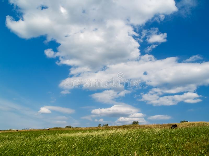 Landscape With Cows Stock Images