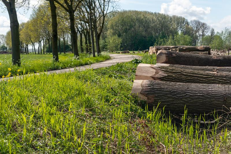 Landscape with curved country road and felled trees stock photography