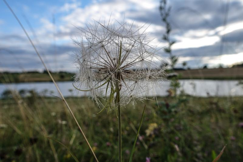 landscape with dandelion wild herbs trees royalty free stock photo