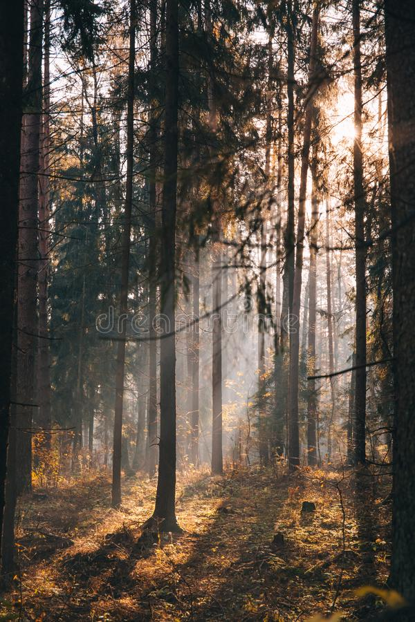 Landscape of deciduous forest on a foggy autumn morning stock images