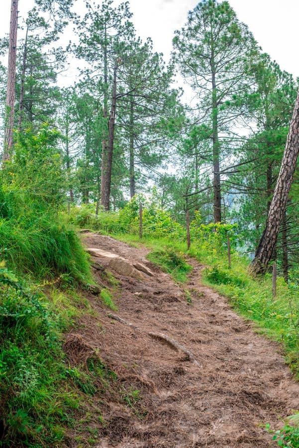 Landscape of Deodar tree in himalayas, sainj valley, kullu, himachal pradesh, india. Photo of deodar tree in himalayas, sainj valley, kullu, himachal pradesh royalty free stock photography