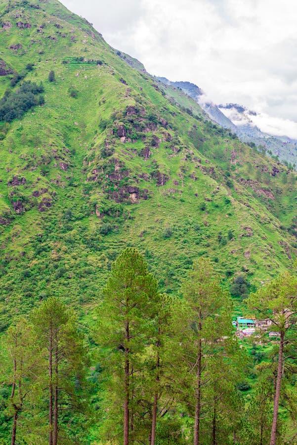Landscape of Deodar tree in himalayas, sainj valley, kullu, himachal pradesh, india. Photo of deodar tree in himalayas, sainj valley, kullu, himachal pradesh royalty free stock photos