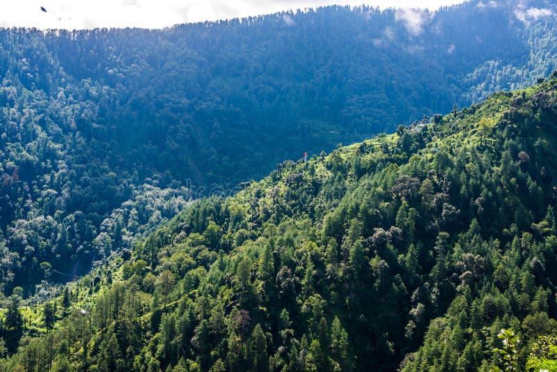 Landscape of Deodar tree in himalayas, sainj valley, kullu, himachal pradesh, india. Photo of deodar tree in himalayas, sainj valley, kullu, himachal pradesh stock photos