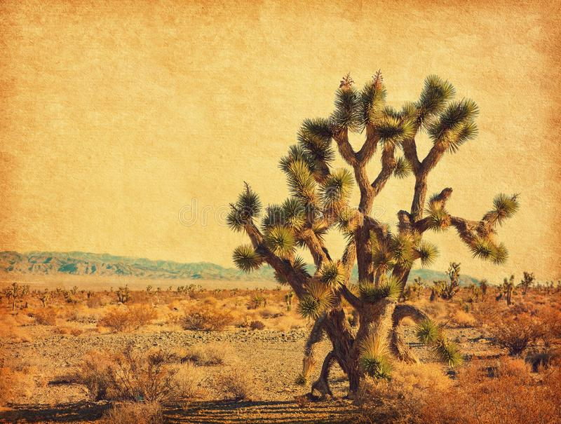 Landscape of the desert with big Joshua Tree,  Mojave Desert,  California, United States. Photo in retro style. Added paper textur. E. Toned image royalty free stock photo