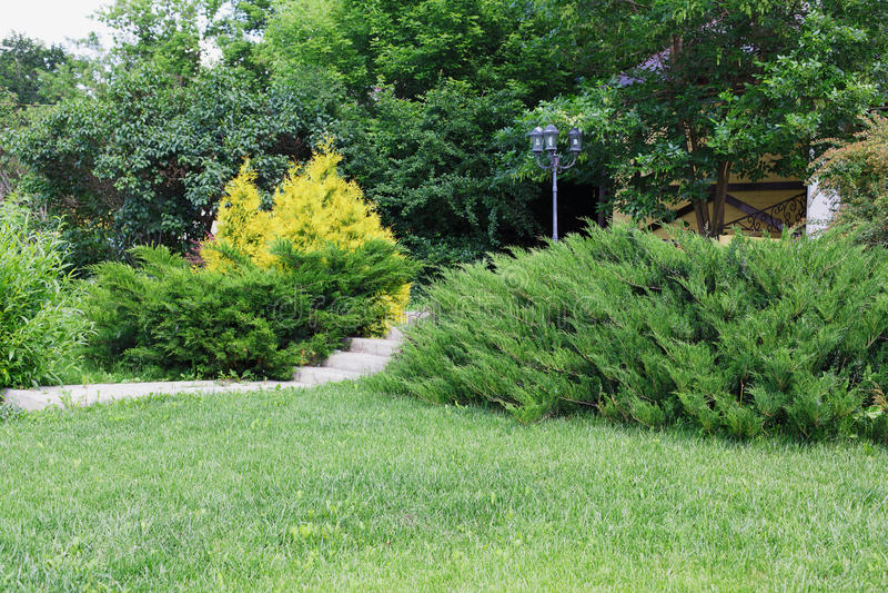 Landscape Design Evergreen Bushes And Path Stock Photo