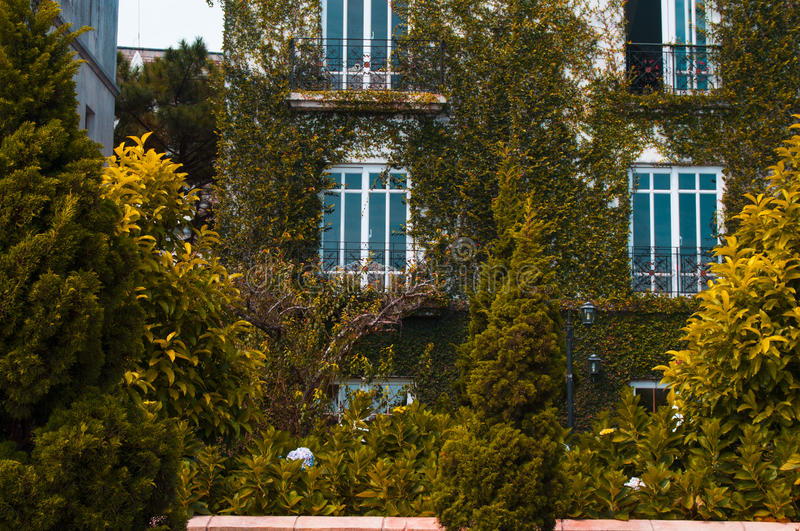 Landscape design. With green leaves walls at the luxury hotel royalty free stock image