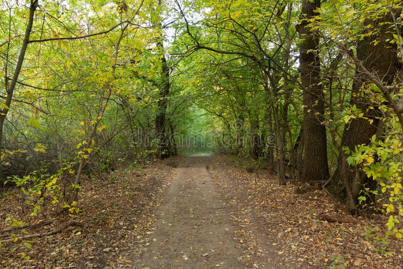 Landscape dirt forest road in autumn. Gold autumn royalty free stock photography