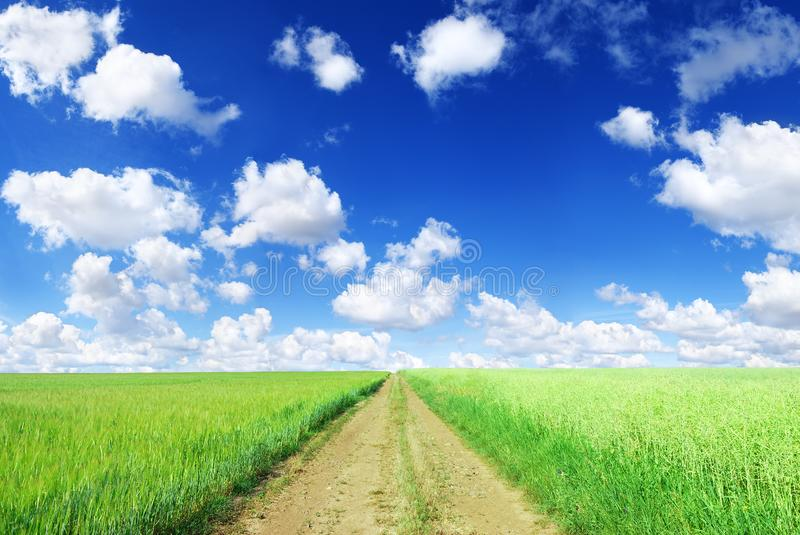Landscape, dirty road among green fields, blue sky in the backgr. Idyllic view, rural path among green fields, blue sky and white clouds in the background stock images
