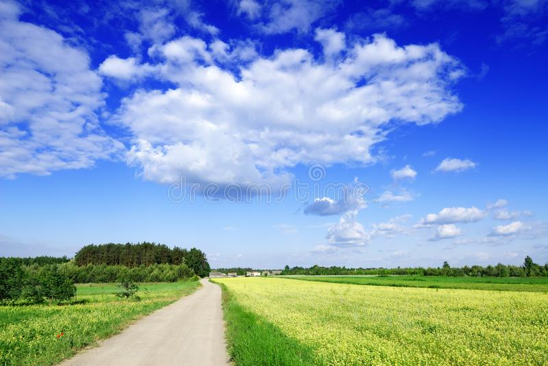 Landscape, dirty road among green fields, blue sky in the backgr. Idyllic view, rural path among green fields, blue sky and white clouds in the background royalty free stock images