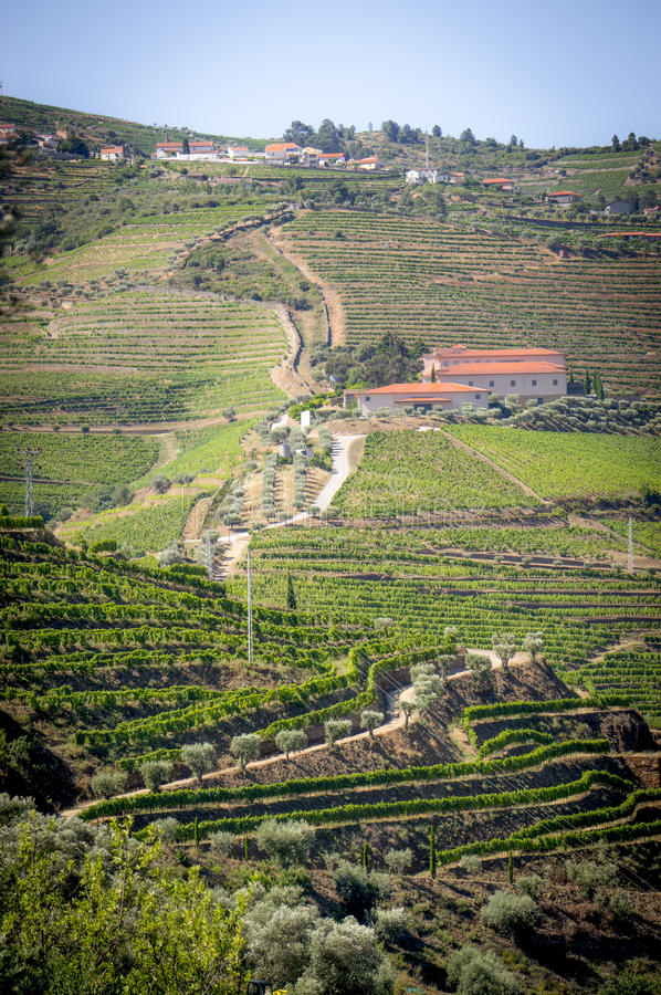 Landscape in Douro Valley royalty free stock photos