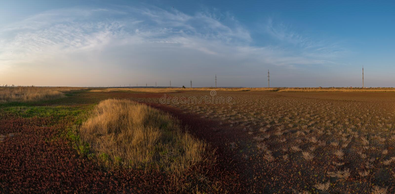 Landscape with dry land and young plants royalty free stock photography