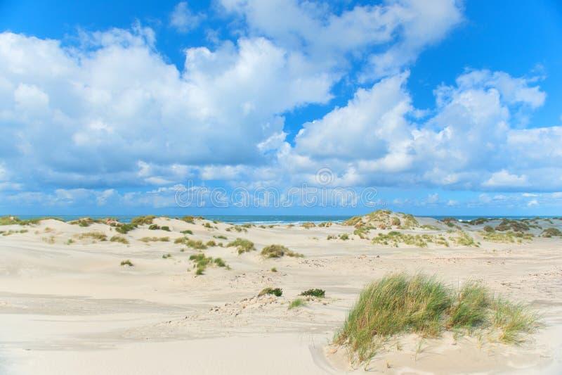 Landscape Dunes in front of empty beach. At Dutch island Terschelling stock photo