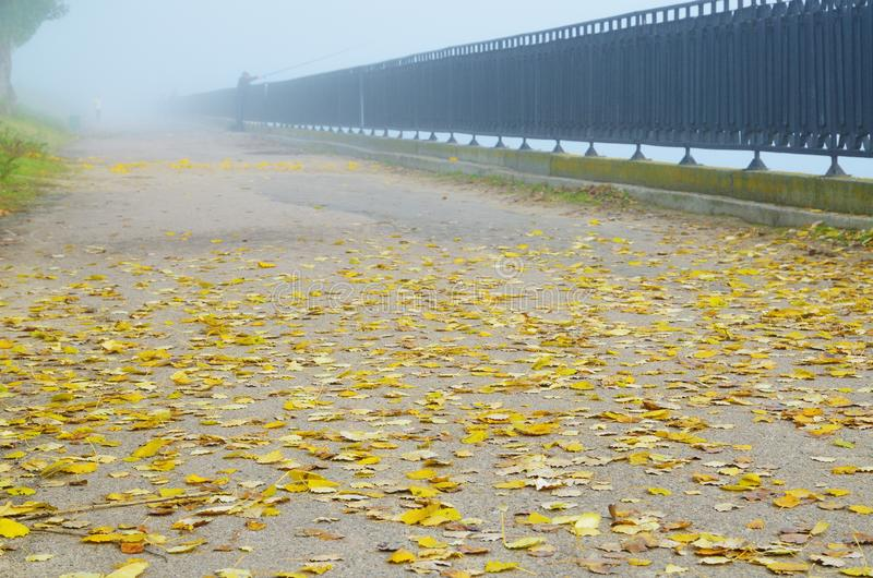 Yellow leaves on embankment in foggy autumn. stock photography