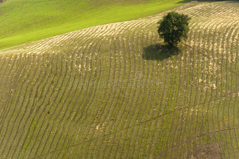 Download Landscape In Emilia-Romagna (Italy) Royalty Free Stock Photography - Image: 21521107