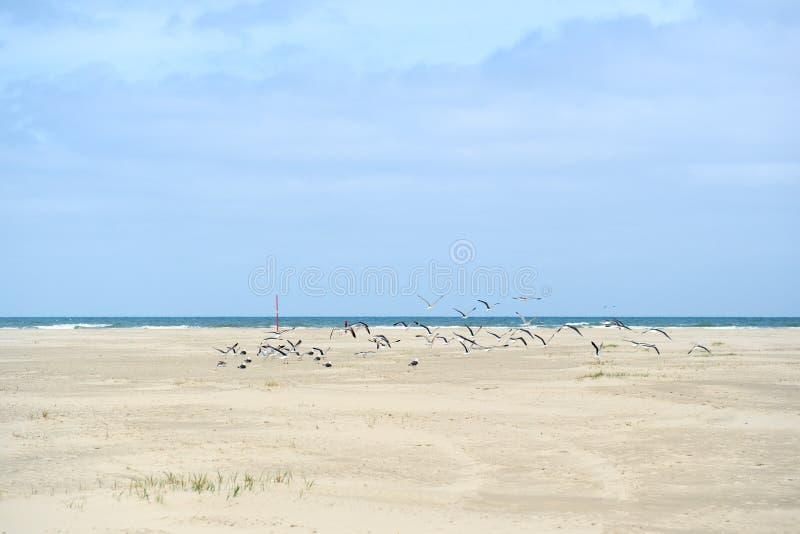 Landscape empty beach. At Dutch island Terschelling stock images